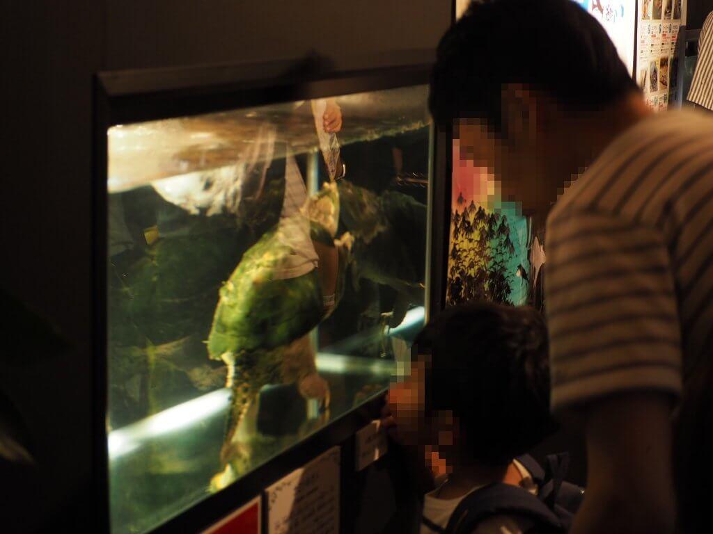 カミツキガメに夢中な少年
