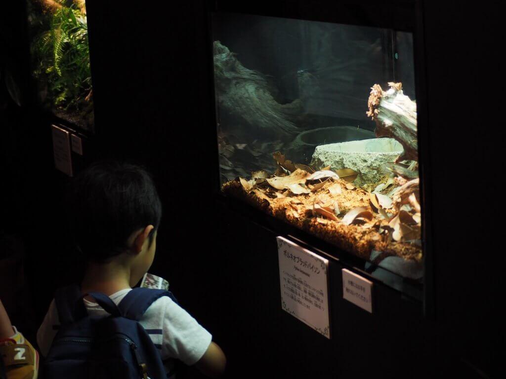 「サワレルハチュウルイ展」イベントブース内の様子