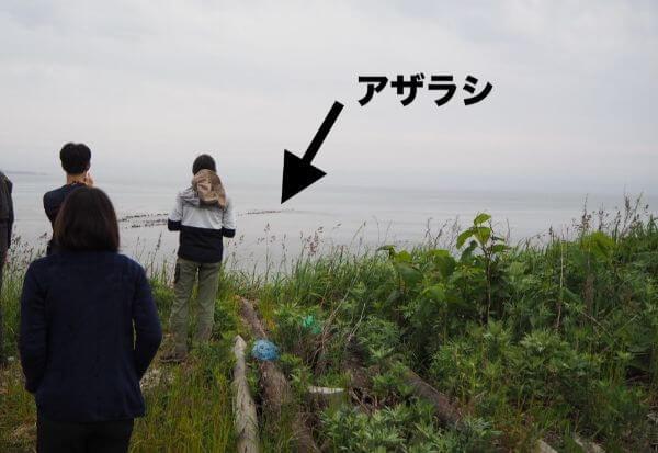 礼文島の野生のアザラシ
