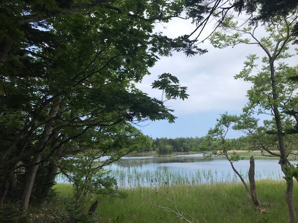 知床五湖の一湖