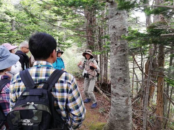 知床五湖のガイドツアー