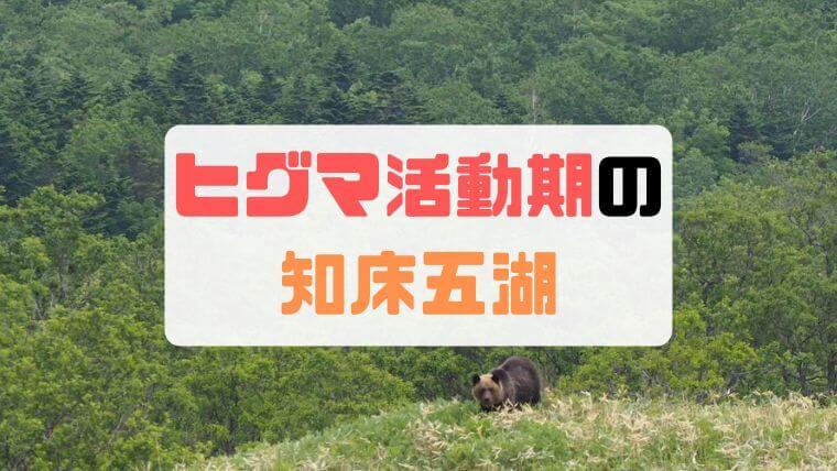【知床五湖】ヒグマ活動期の小ループツアー参加でヒグマを発見【6月】