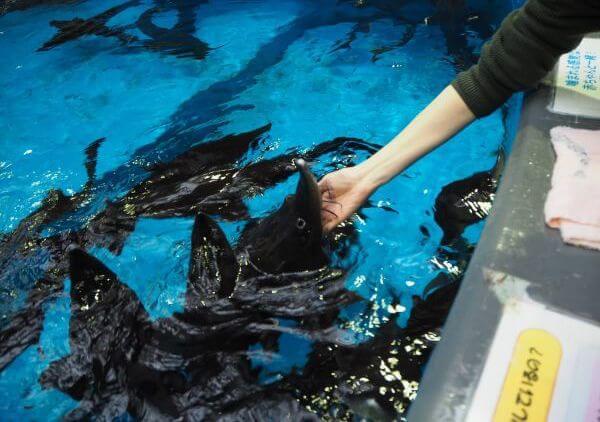 サーモンパークのチョウザメ指パク体験