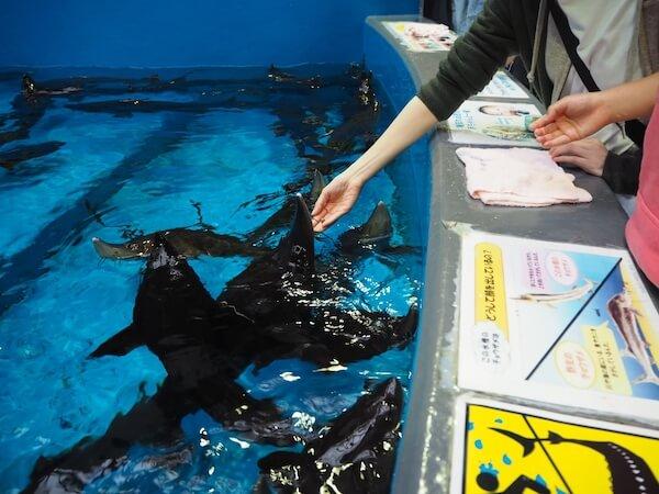 標津サーモン科学館のチョウザメ指パク体験