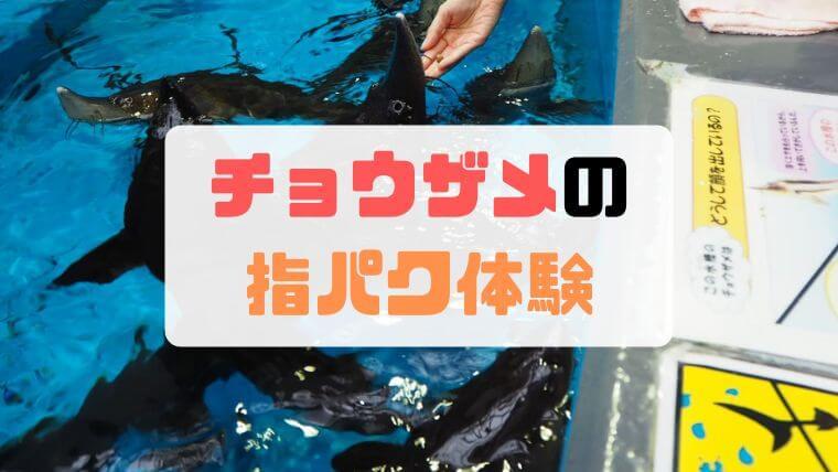 標津サーモンパーク科学館の「チョウザメ指パク体験」が軽めの度胸試しだった